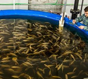 Introducci n a la cr a de peces redmidia for Cria de peces para consumo humano
