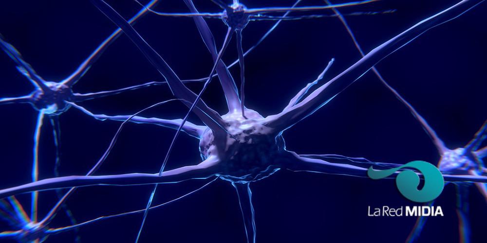 El sistema nervioso del perro – Definición, anatomía y subdivisiones ...